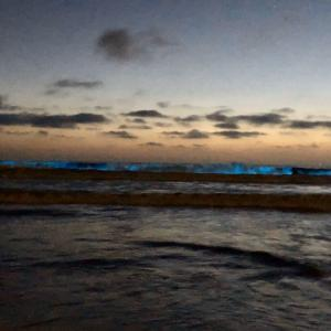 Bioluminescenceの光るサンディエゴの海