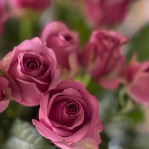 結婚記念日のお花貰ったよ(笑)