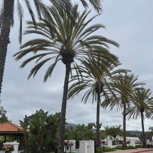 雨のサンディエゴと雨上がりのサンディエゴ