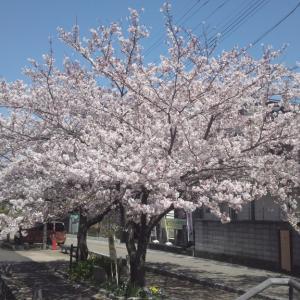 2021年度学習活動がスタート!  -三重県桑名市立教まちづくり拠点施設「-話したくなる-韓国語入門講座」