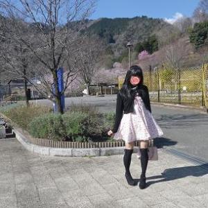 桜、リベンジかな?