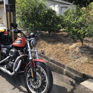 ハーレーで行く三重県熊野でマグロ丼とみかん買い出し