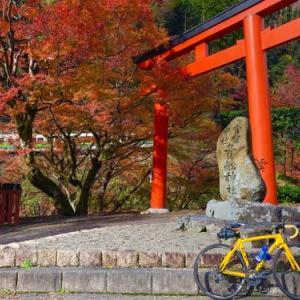 COLNAGOで行く貴船神社へ紅葉サイクリング