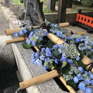 京都の夏越の大祓・護王神社へ