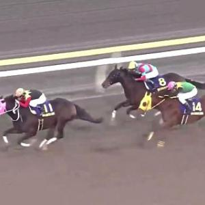 JRAはホープフルS&地方は東京大賞典に注目/今週の競馬界の見どころ
