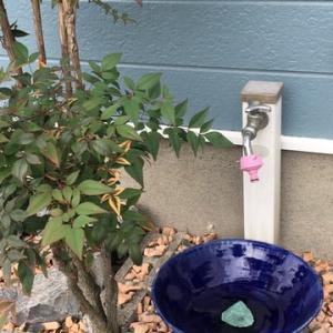 お庭の手洗い鉢