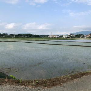稲の豊作を願って