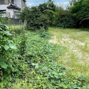 草だらけの畑にジャガイモを植えました・・・2021年9月