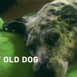 老犬と楽しく暮らす6つのコツ