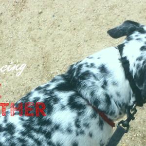 犬が必要としているのはどんなリーダーか〜権勢症候群なんてないよという話〜