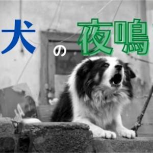 老犬の夜鳴き(夜泣き)〜大切な愛犬の世話に疲れ果ててしまう前に〜