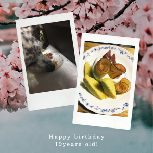 【高齢犬と暮らす】お誕生日おめでとう生きててくれてありがとう