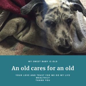 【老犬と暮らす】毎日が愛しき日々