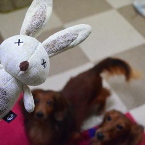 新しいウサギおもちゃ