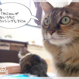 猫部屋ひきこもりにつき・・・