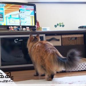 緊急事態宣言に反応する猫
