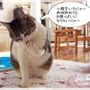 失礼な猫娘