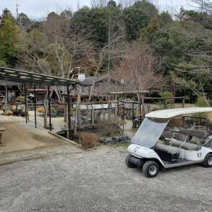 めだか村にゴルフカートがやってきた!新しい楽しみ方が増えましたよ!