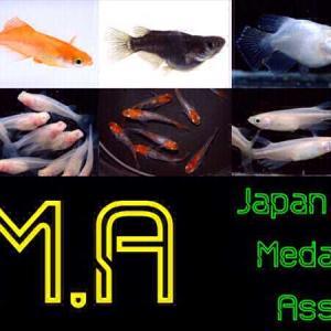 日本メダカ協会ってなに?概要と入会するメリットについて