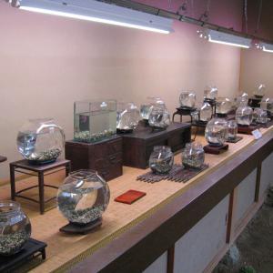 古民具とメダカ展示