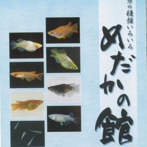 メダカカタログNo.8(2009年)の挨拶より