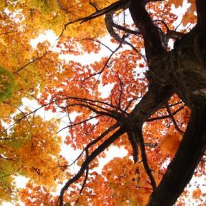 札幌の紅葉2019。屯田みずほ東公園の紅葉がピーク