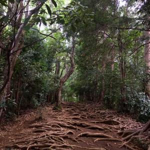 高尾山トレイルラン・陣馬山往復28kmルート(茶屋にご注意を)