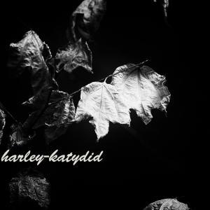 枯れ葉のダンス
