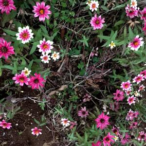 花はな  ②