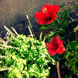 夕方くらーい   花はな ①