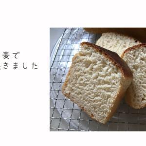スペルト小麦でパンを焼いてみました。グルテンフリー生活でもたまにはパンが食べたいのです。
