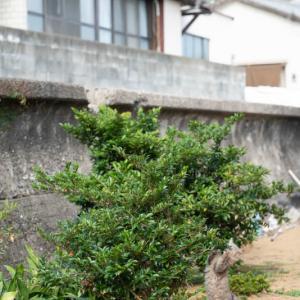 植木やさん