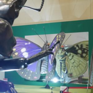 大阪市立自然史博物館「昆虫展」の内覧会に行ってきました