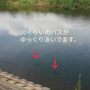 【川バス】お盆休み!最強釣具購入!暑いの我慢でデイゲーム!
