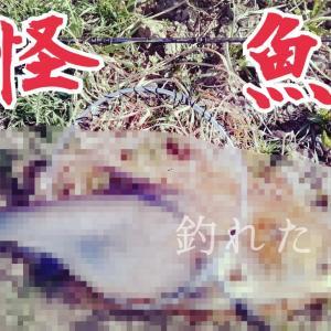 【釣ったぜ】荒川温排水リベンジマッチ【怪魚】