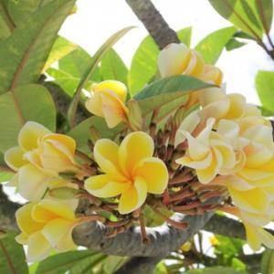 Beautiful Flowers at Kahala Avenue✨