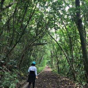 Makiki Valley Trailで森林浴ウォーキング ①✨