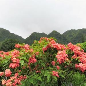 雨のライアン植物園で大自然に浸る ★ 傘✨