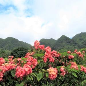 南国の花からのパワー @ ライアン植物園 ★ ハロウィーン・プロジェクト✨