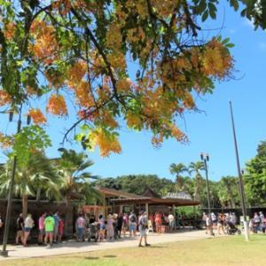 ホノルル動物園とワイキキ水族館✨