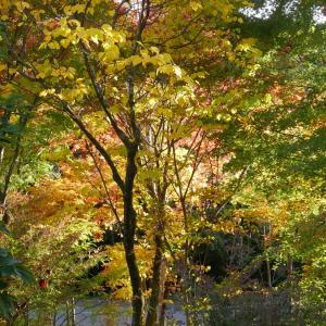 庭で紅葉狩り