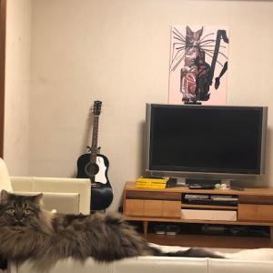 二匹の猫にコントロールされてしまっています💦