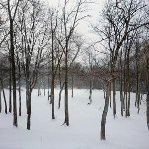 北海道へ帰省しました2019年秋~ニセコ昆布温泉 甘露の森