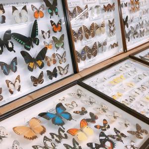 世界が広がる「昆虫展」新富近隣センターで開催中☆(柏市豊四季)