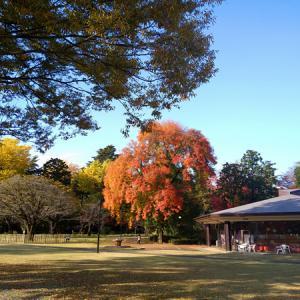 麗澤大学柏キャンパスの紅葉が綺麗でした!(柏市光ヶ丘)