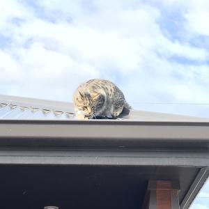 屋根の上の虎丸救出劇