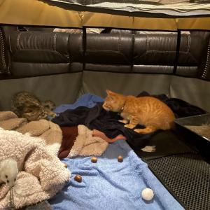 保護猫ちゃん2匹、初対面の巻
