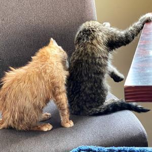 クィーンズタウン保護猫ボランティア団体の活動について