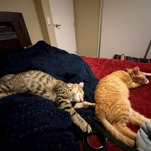 眠る猫と眠る幸せな時間