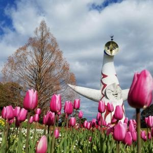 万博記念公園 太陽の塔 アイスチューリップを見に行って来ました